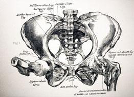 Bekkenfysiotherapie TIM Fysiotherapie